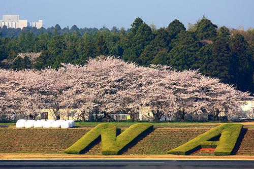 '12RJAA桜 010-3.jpg