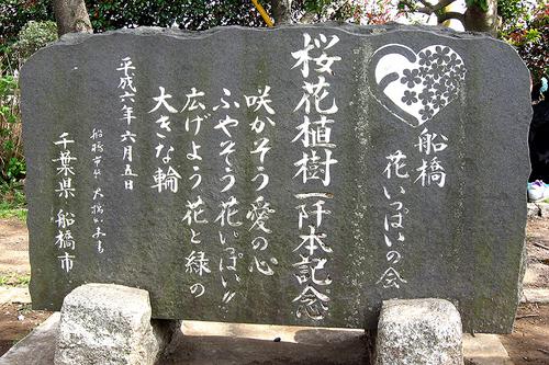 海老川桜② 035-3.jpg