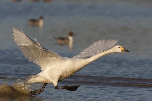 007'09白鳥① 088-2.jpg
